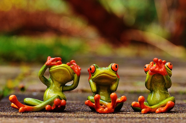 frogs-1274770_640